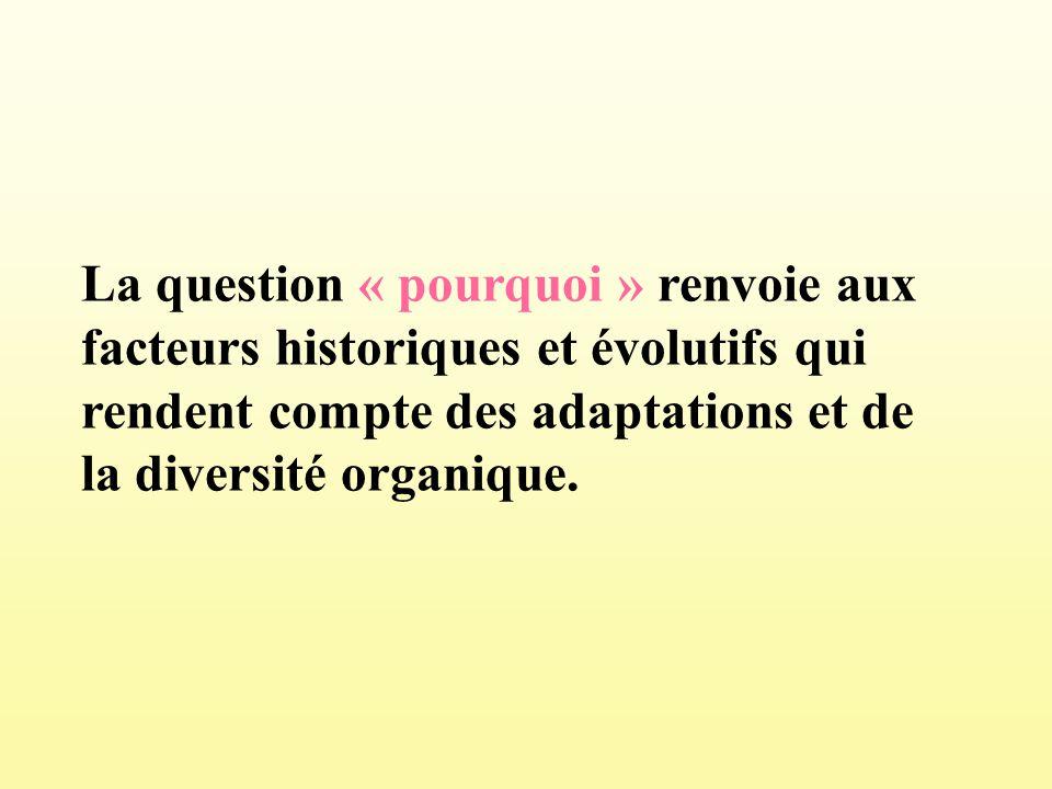 La question « pourquoi » renvoie aux facteurs historiques et évolutifs qui rendent compte des adaptations et de la diversité organique.