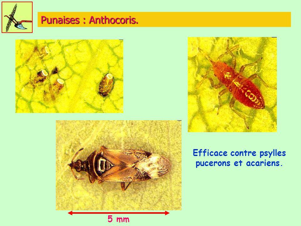 Efficace contre psylles pucerons et acariens.
