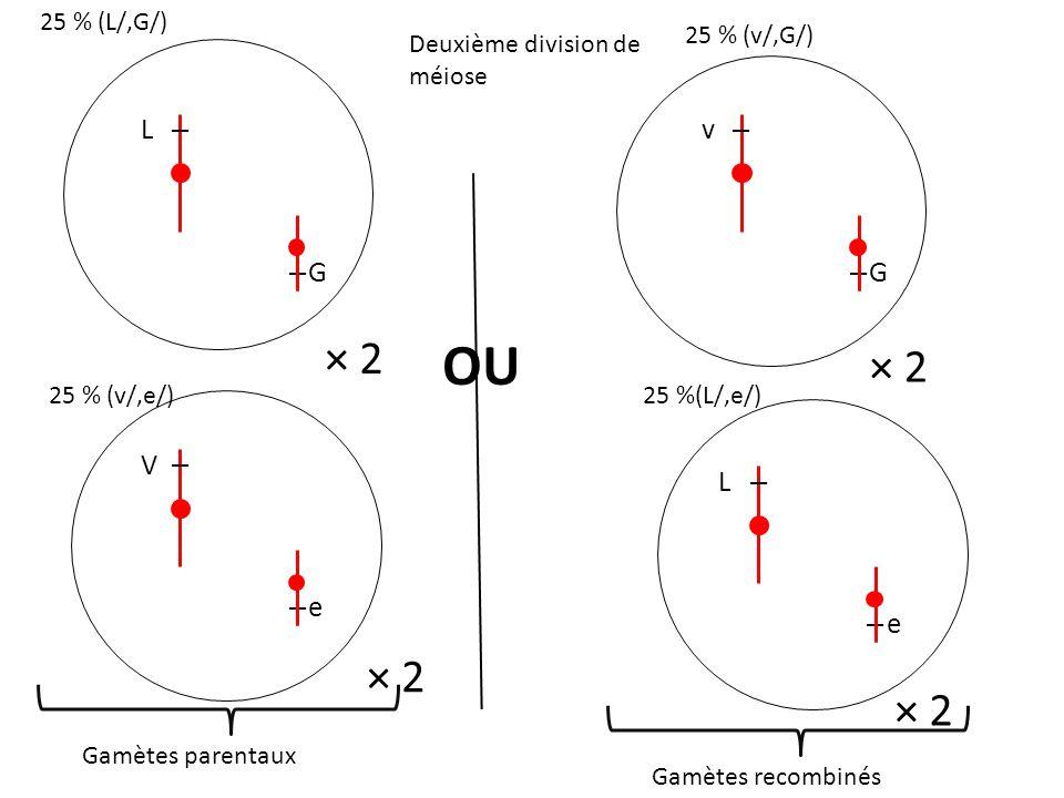OU × 2 × 2 × 2 × 2 L G v G V e L e 25 % (L/,G/) 25 % (v/,G/)