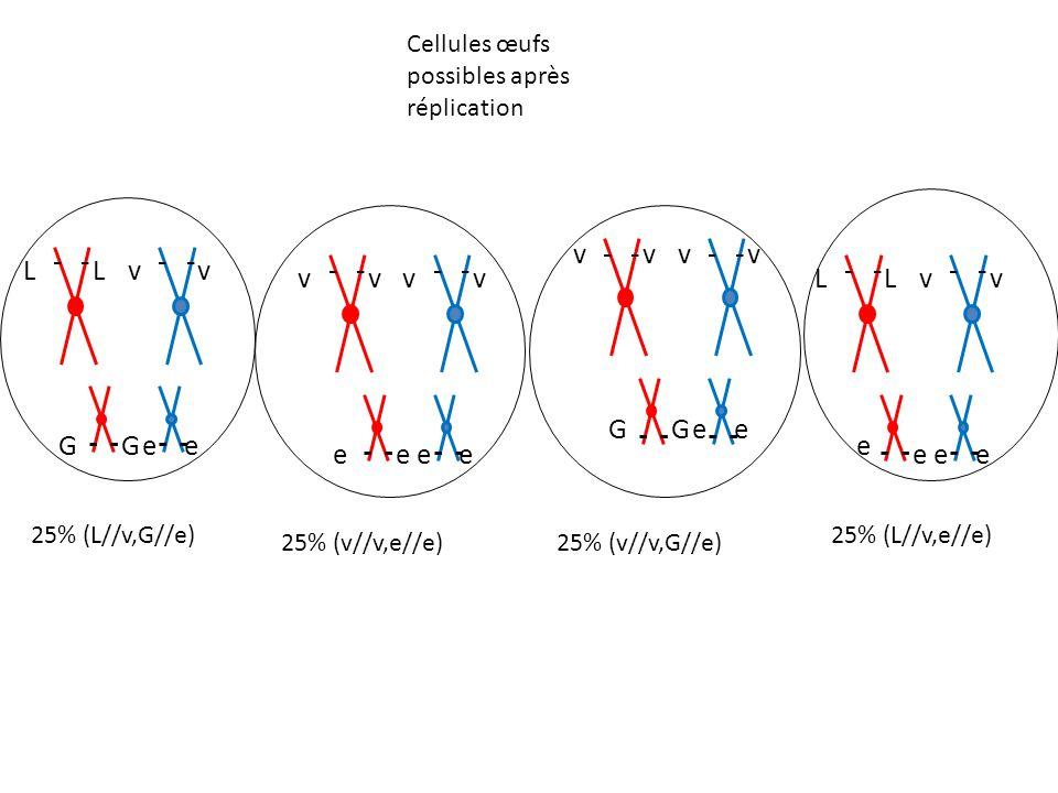 v G e L v G e v e L v e Cellules œufs possibles après réplication