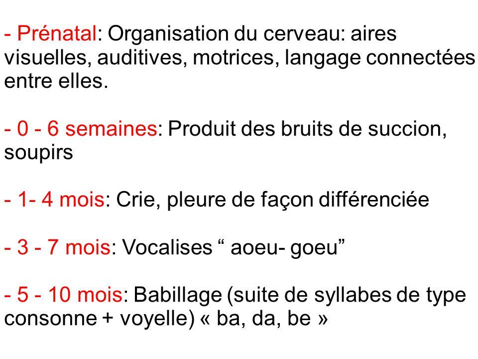 - Prénatal: Organisation du cerveau: aires visuelles, auditives, motrices, langage connectées entre elles.