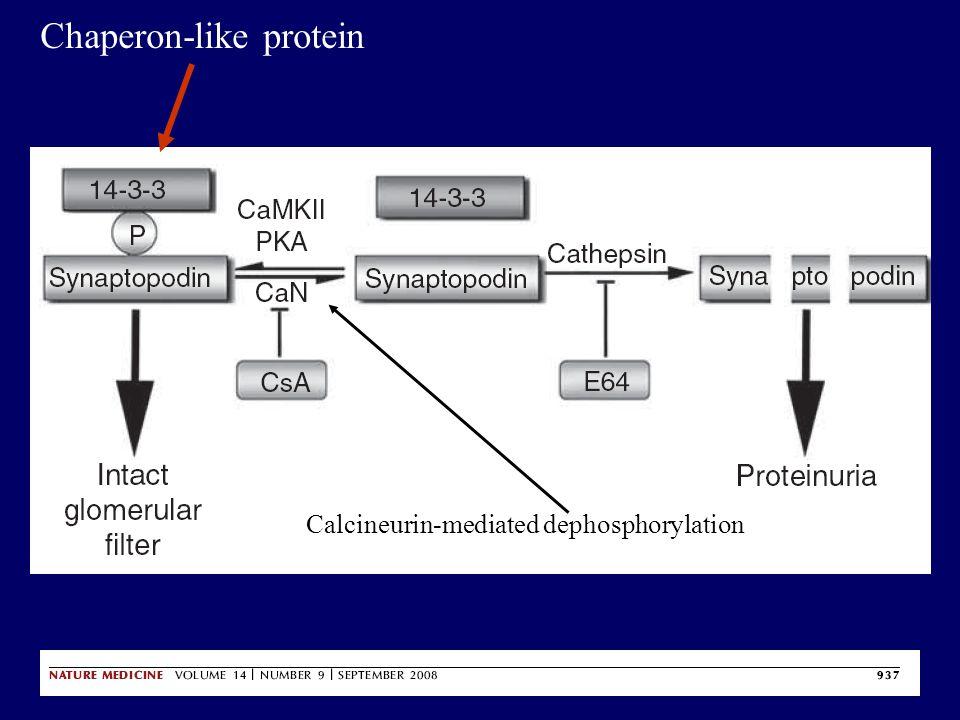 Chaperon-like protein