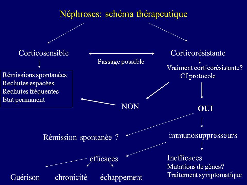 Néphroses: schéma thérapeutique