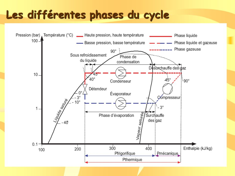 Les différentes phases du cycle