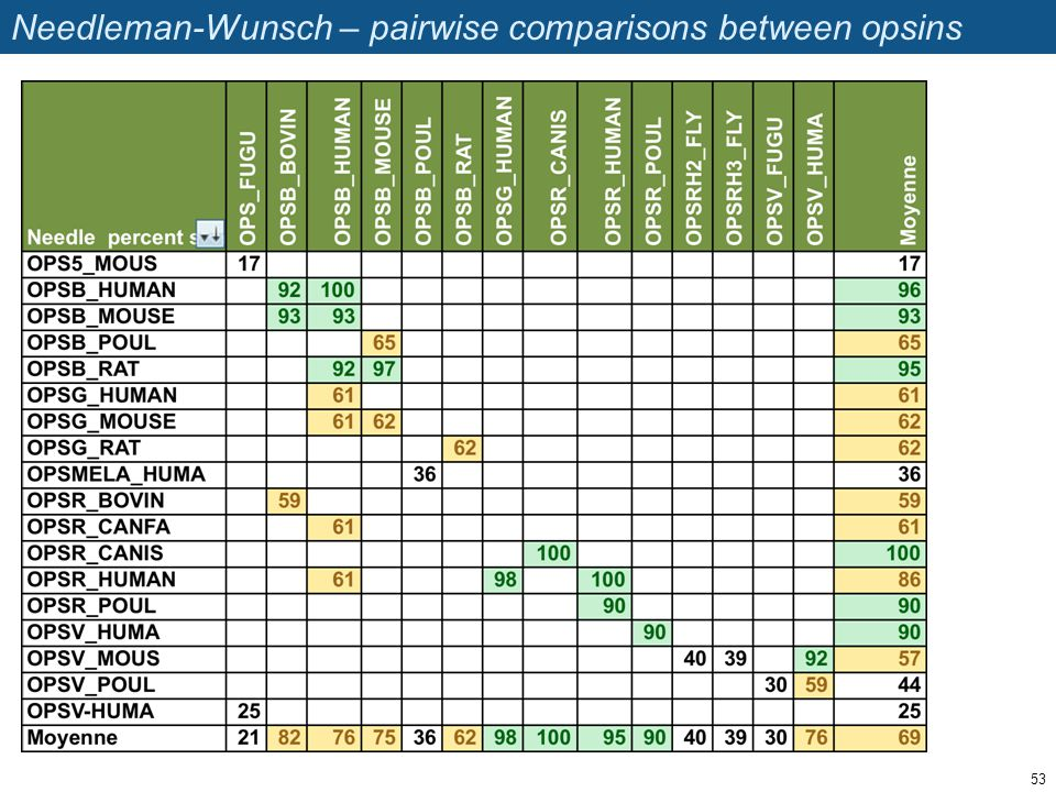 Needleman-Wunsch – pairwise comparisons between opsins