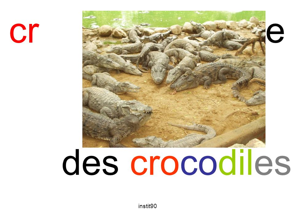 cr crocodile des crocodiles instit90