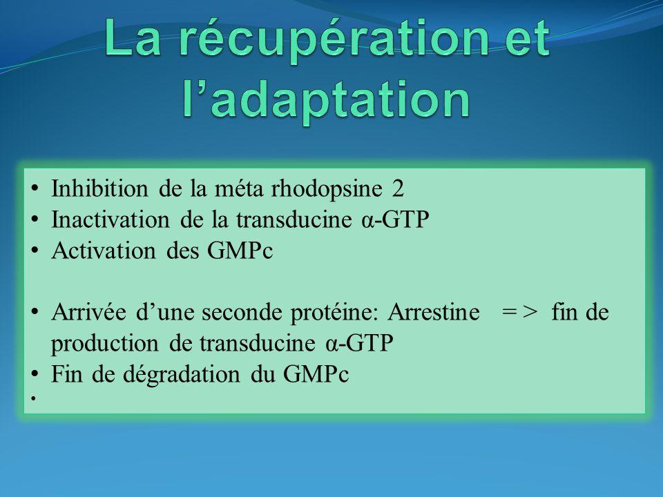 La récupération et l'adaptation
