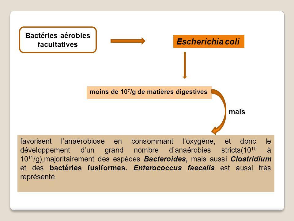 Bactéries aérobies facultatives
