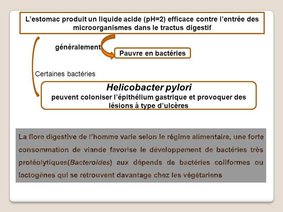 L'estomac produit un liquide acide (pH=2) efficace contre l'entrée des microorganismes dans le tractus digestif