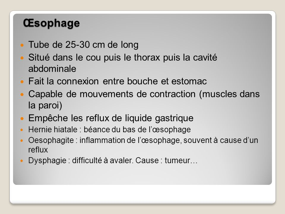 Œsophage Tube de 25-30 cm de long