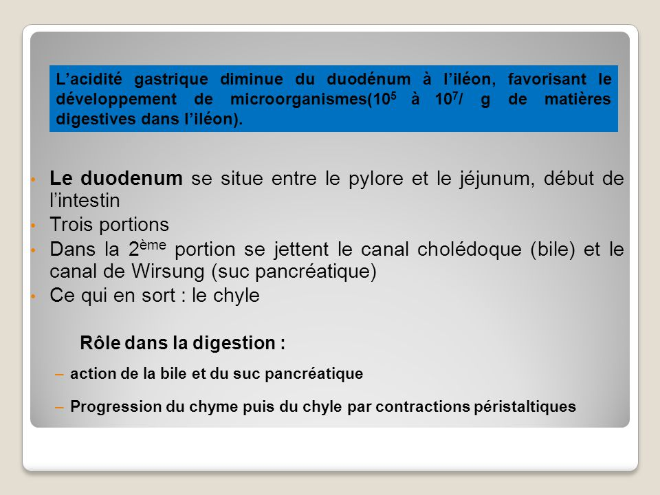 L'acidité gastrique diminue du duodénum à l'iléon, favorisant le développement de microorganismes(105 à 107/ g de matières digestives dans l'iléon).