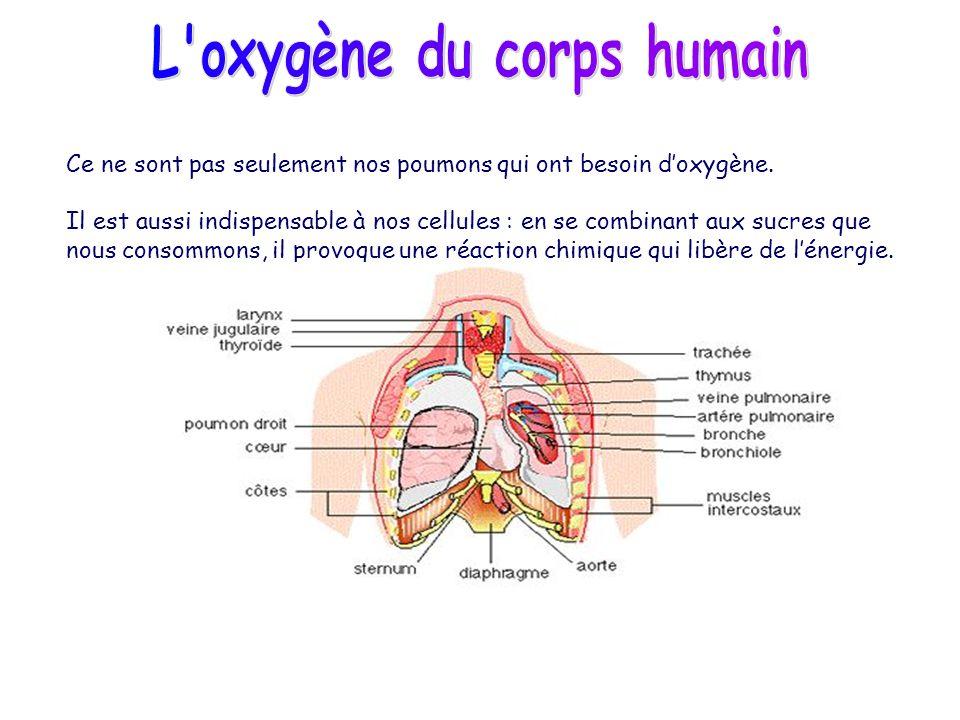 L oxygène du corps humain