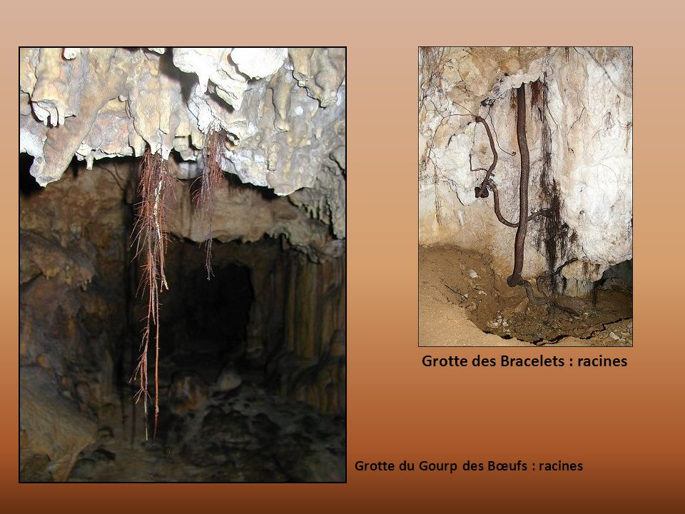 Grotte des Bracelets : racines