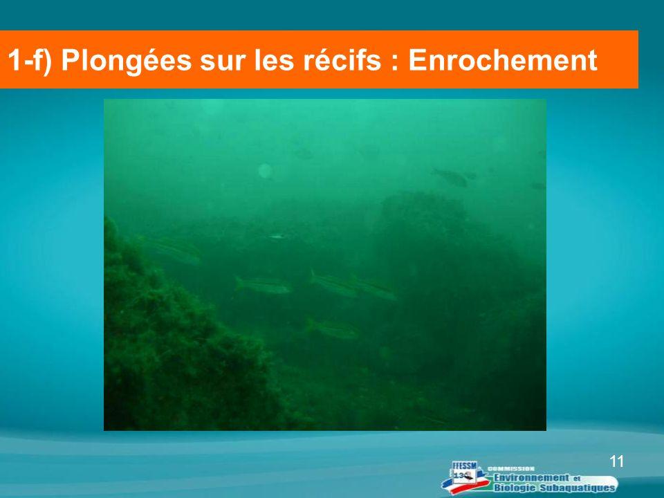1-f) Plongées sur les récifs : Enrochement