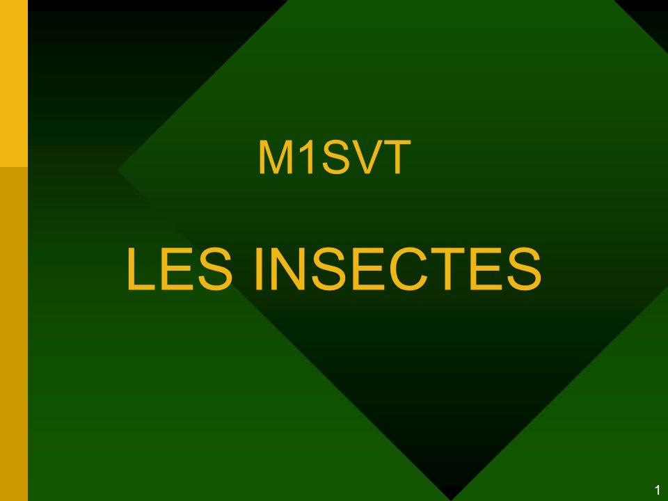 M1SVT LES INSECTES