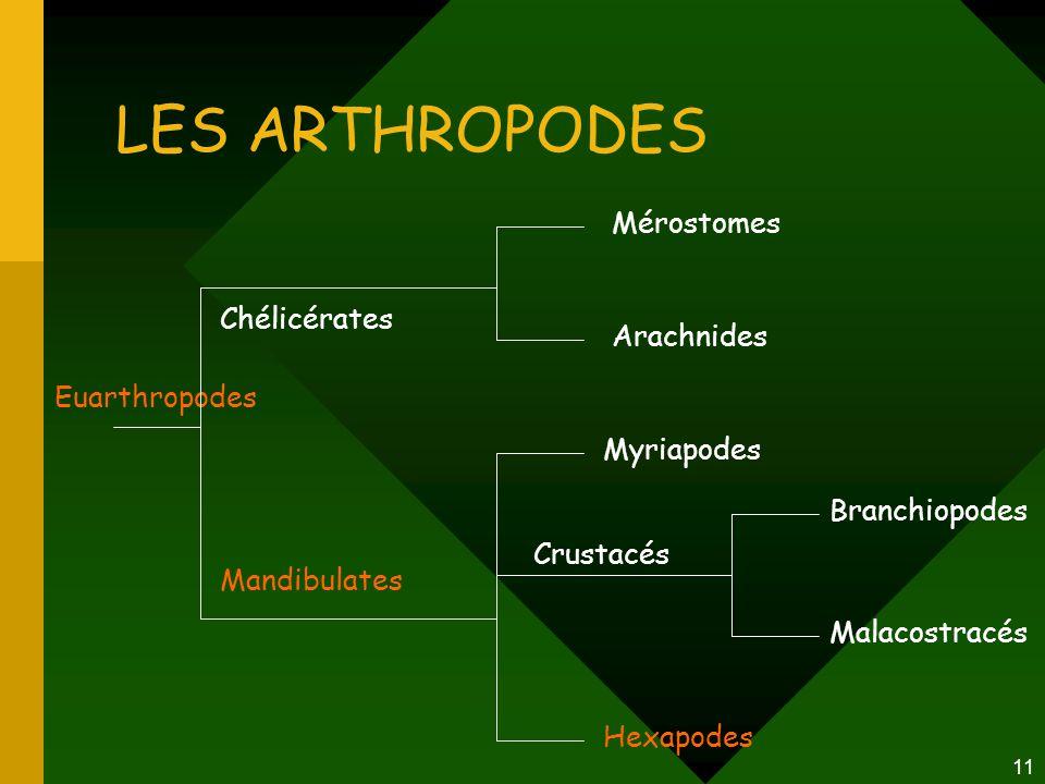 LES ARTHROPODES Mérostomes Chélicérates Arachnides Euarthropodes
