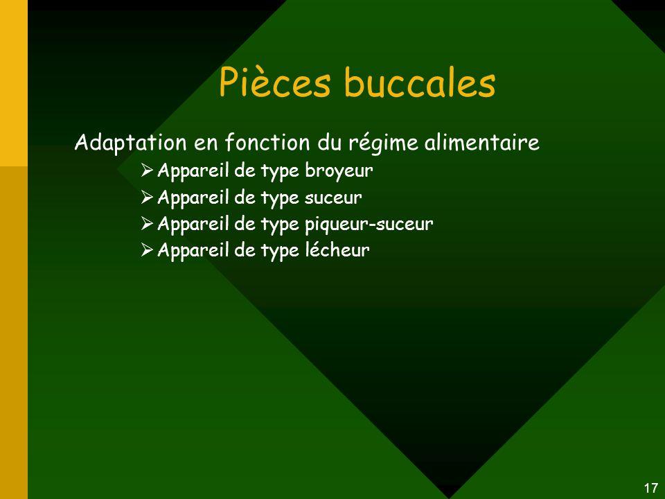 Pièces buccales Adaptation en fonction du régime alimentaire