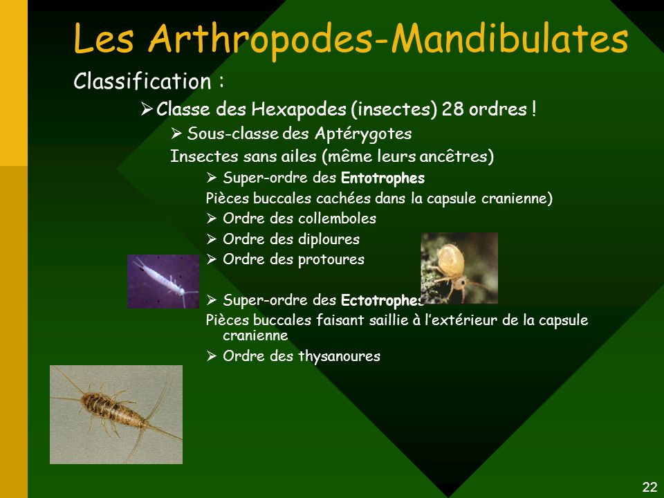 Les Arthropodes-Mandibulates