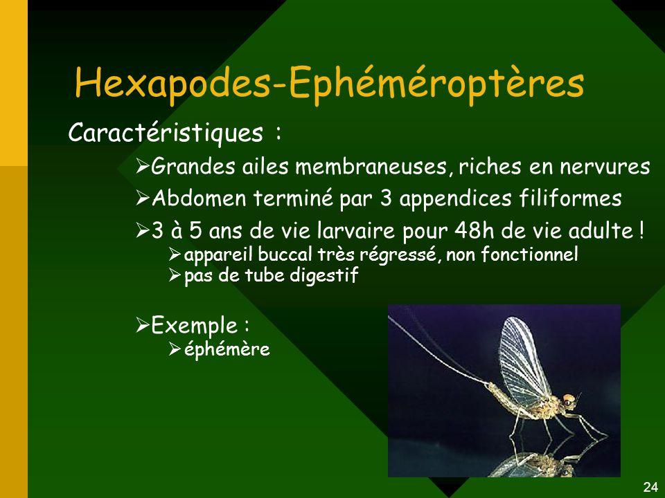 Hexapodes-Ephéméroptères