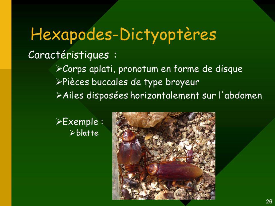 Hexapodes-Dictyoptères