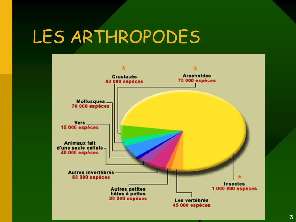 LES ARTHROPODES * * *