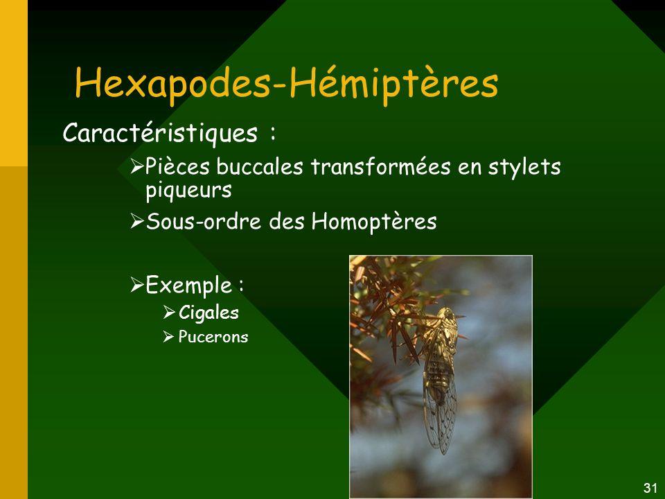 Hexapodes-Hémiptères