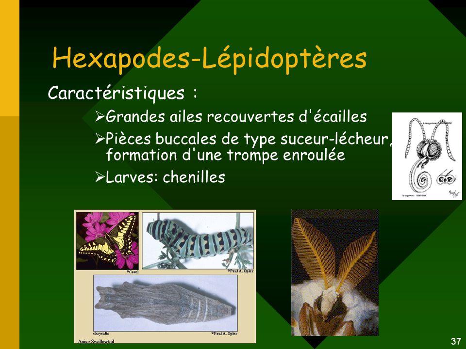 Hexapodes-Lépidoptères