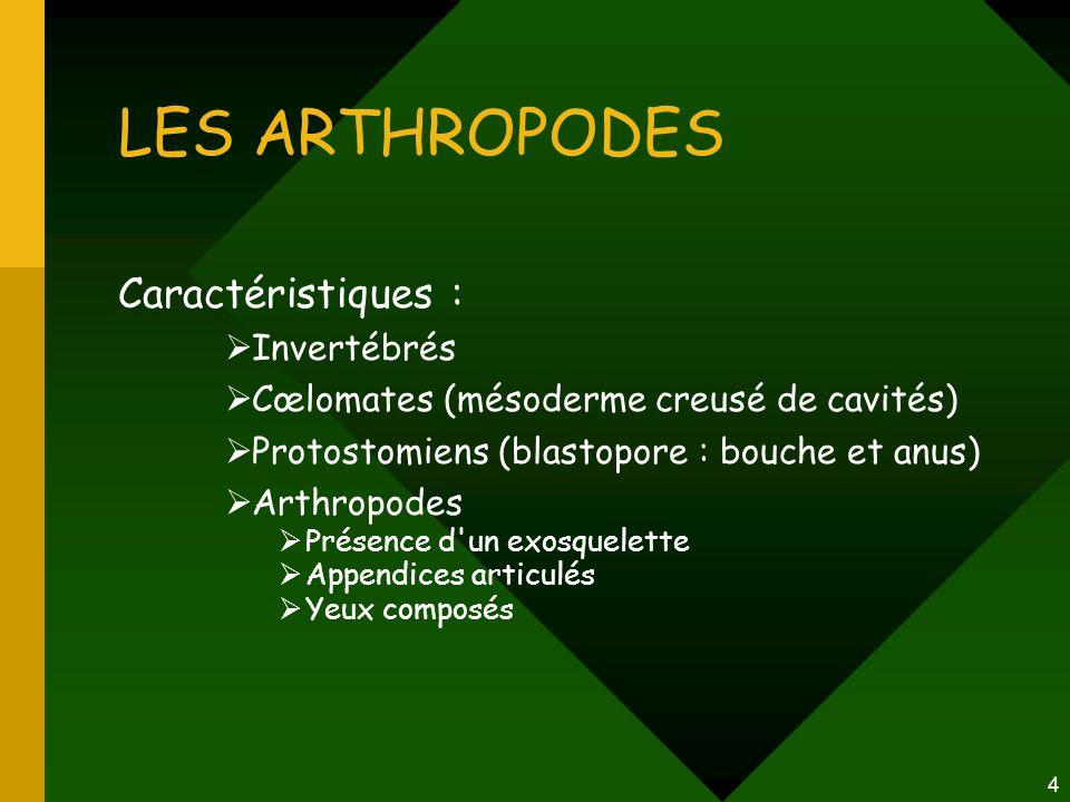 LES ARTHROPODES Caractéristiques : Invertébrés