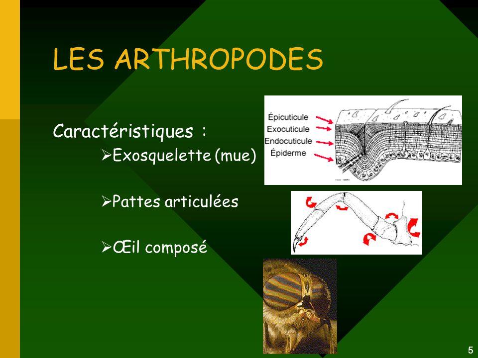 LES ARTHROPODES Caractéristiques : Exosquelette (mue)
