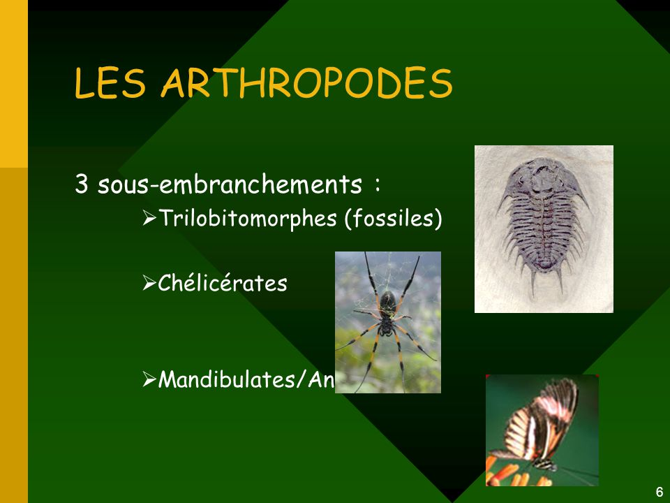 LES ARTHROPODES 3 sous-embranchements : Trilobitomorphes (fossiles)