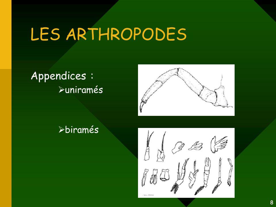 LES ARTHROPODES Appendices : uniramés biramés