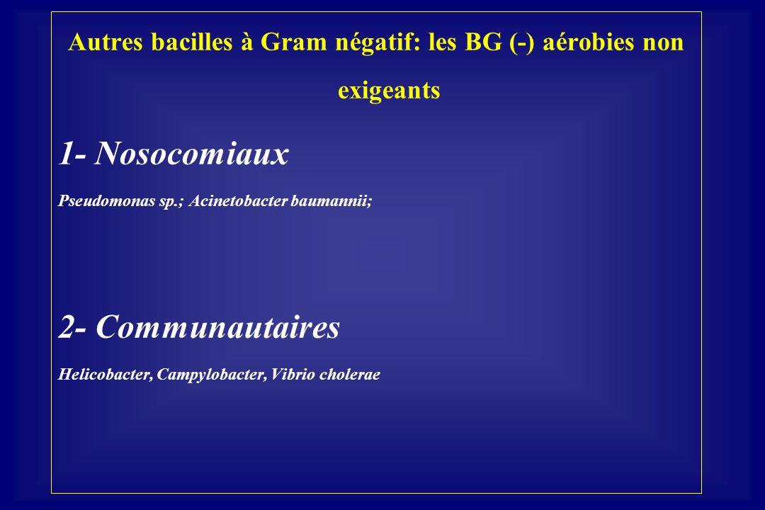 Autres bacilles à Gram négatif: les BG (-) aérobies non exigeants