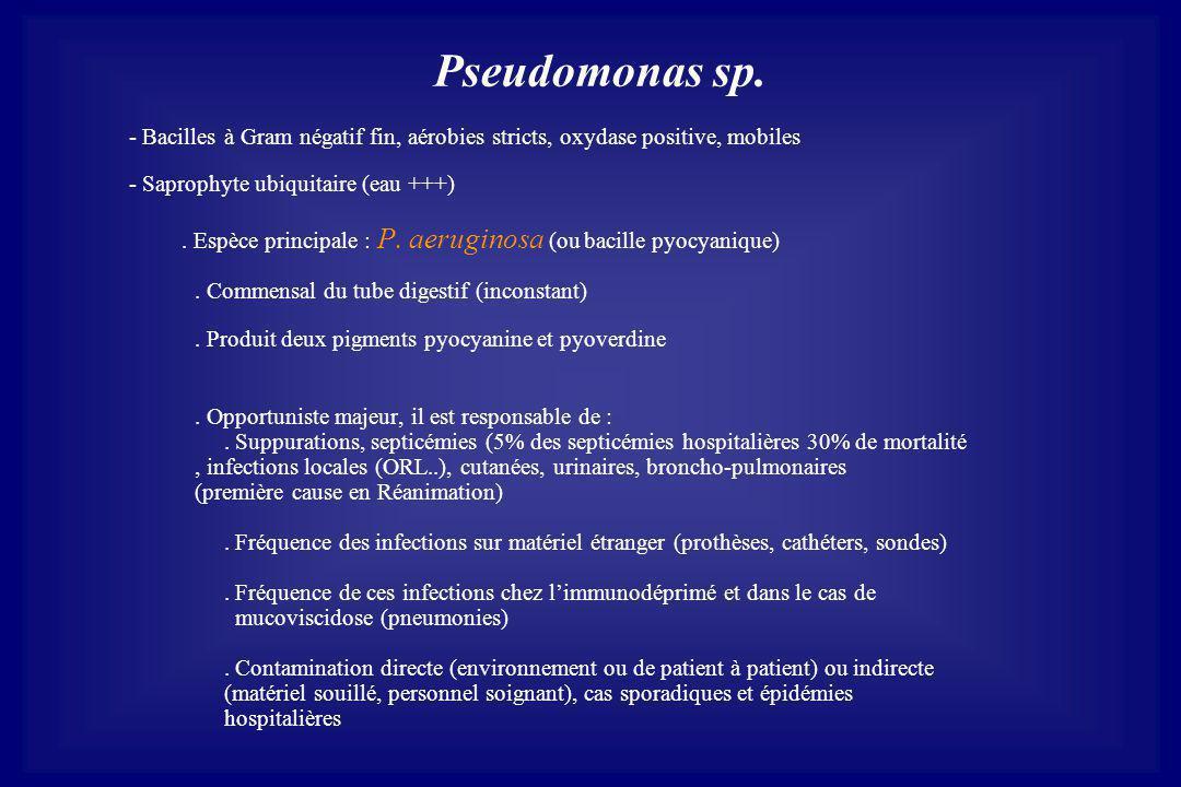 Pseudomonas sp. - Bacilles à Gram négatif fin, aérobies stricts, oxydase positive, mobiles. - Saprophyte ubiquitaire (eau +++)