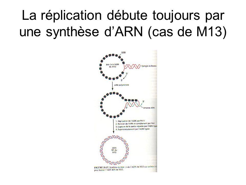 La réplication débute toujours par une synthèse d'ARN (cas de M13)