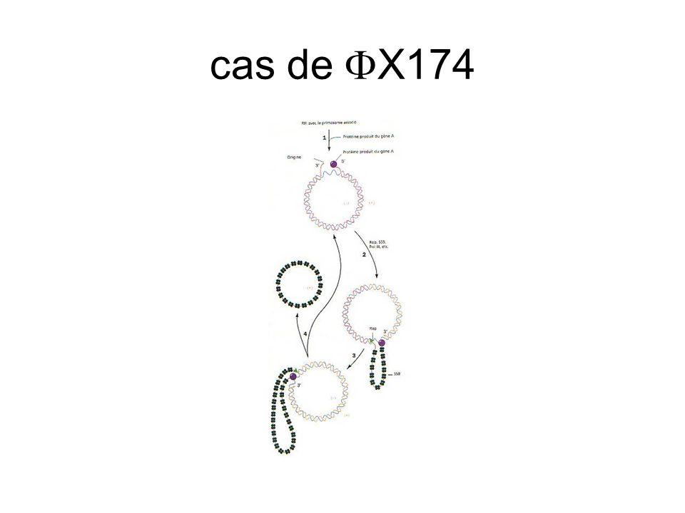cas de FX174