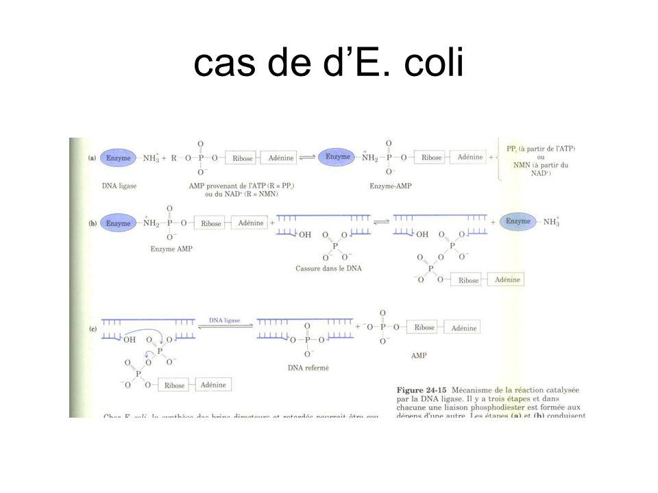 cas de d'E. coli