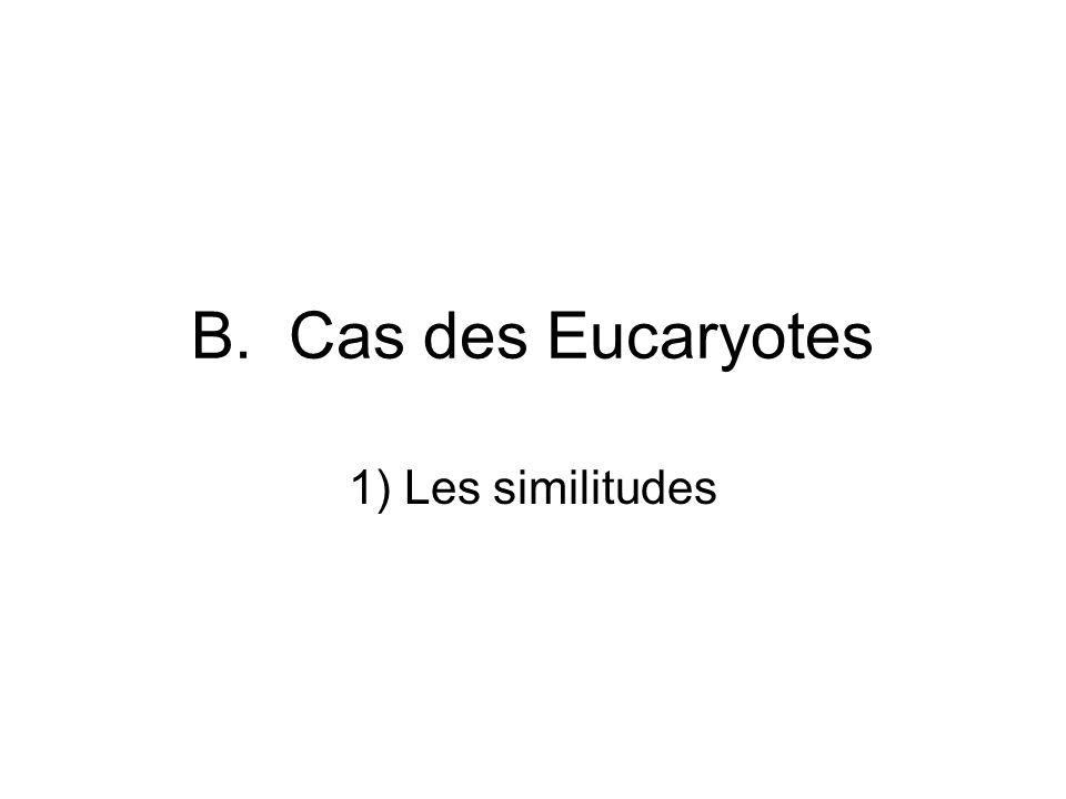 B. Cas des Eucaryotes 1) Les similitudes