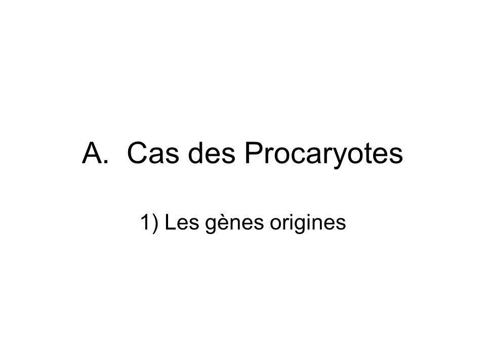 A. Cas des Procaryotes 1) Les gènes origines
