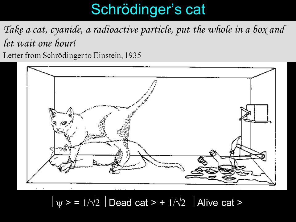 Schrödinger's cat Take a cat, cyanide, a radioactive particle, put the whole in a box and let wait one hour!