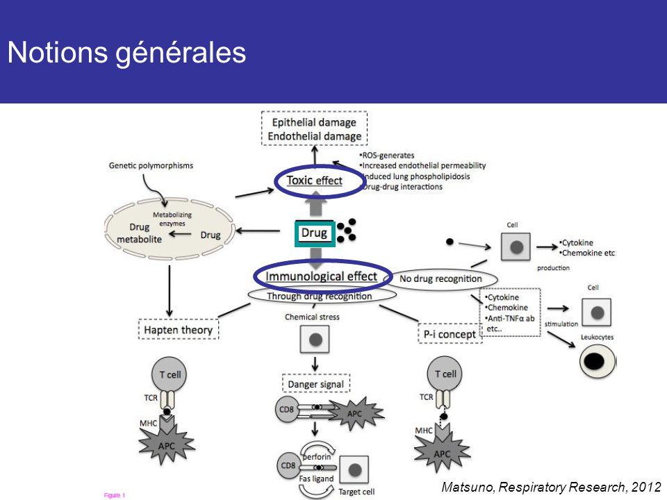 Notions générales Matsuno, Respiratory Research, 2012