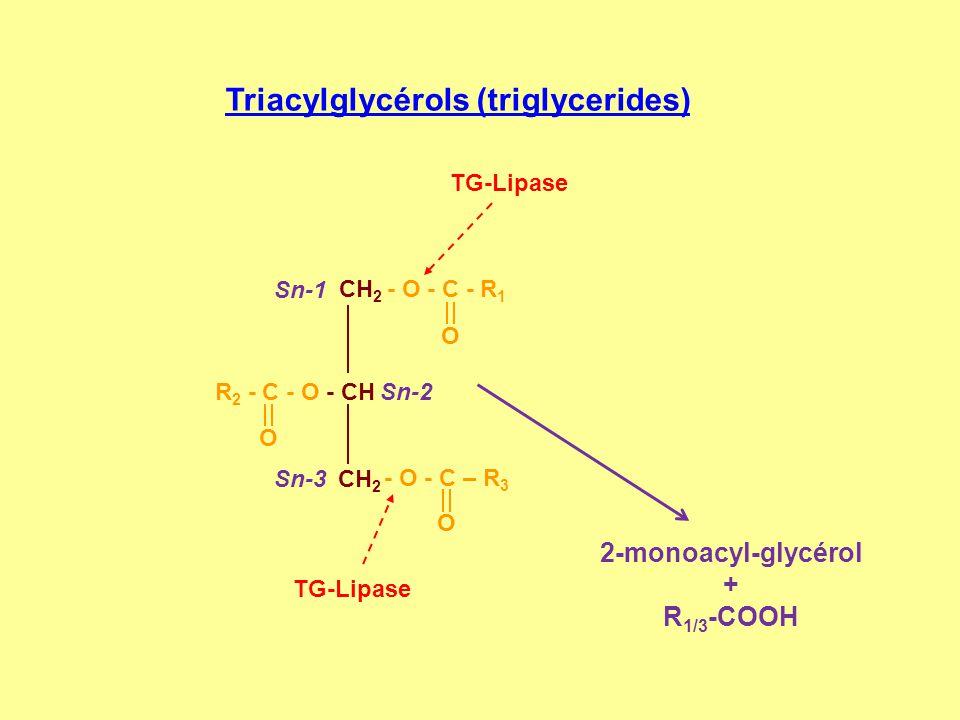 Triacylglycérols (triglycerides)