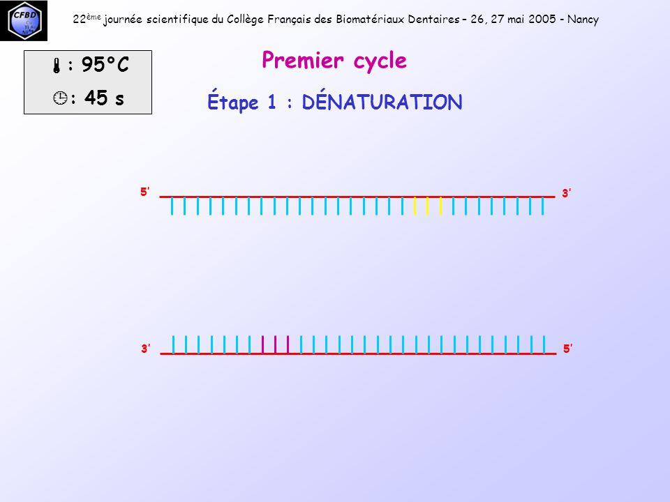 Premier cycle : 95°C : 45 s Étape 1 : DÉNATURATION