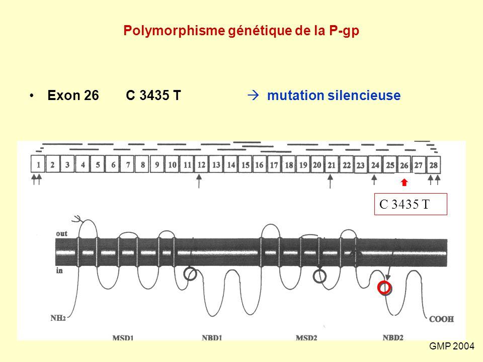 Polymorphisme génétique de la P-gp