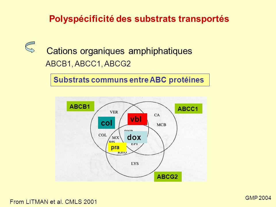 Polyspécificité des substrats transportés