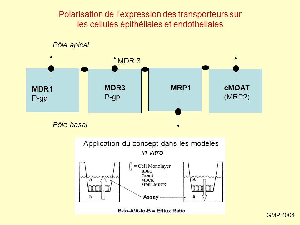 Application du concept dans les modèles in vitro
