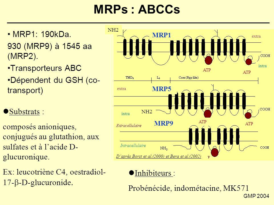 MRPs : ABCCs MRP1: 190kDa. 930 (MRP9) à 1545 aa (MRP2).