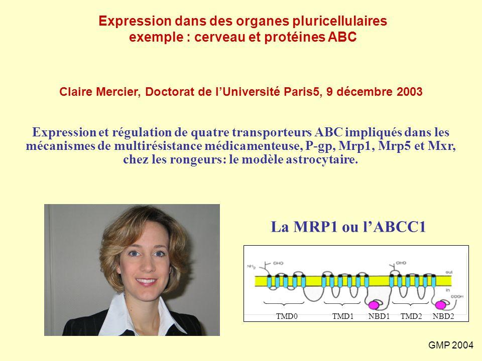 Claire Mercier, Doctorat de l'Université Paris5, 9 décembre 2003