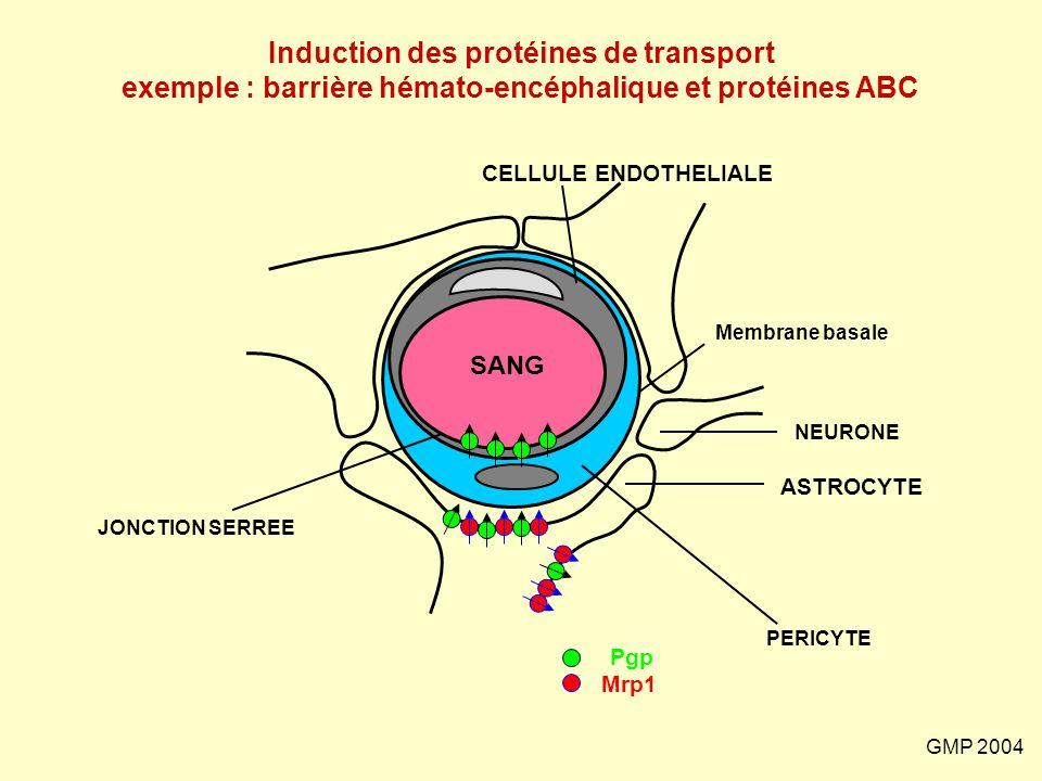 Induction des protéines de transport exemple : barrière hémato-encéphalique et protéines ABC