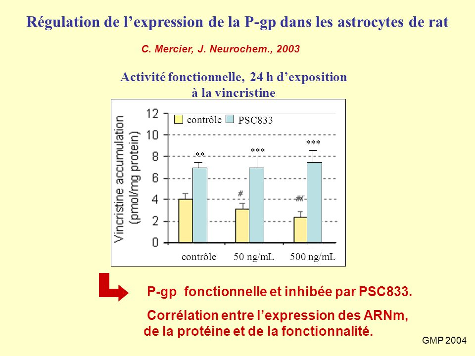 Régulation de l'expression de la P-gp dans les astrocytes de rat