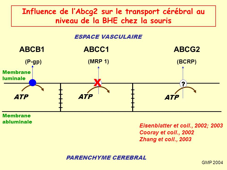 Influence de l'Abcg2 sur le transport cérébral au niveau de la BHE chez la souris
